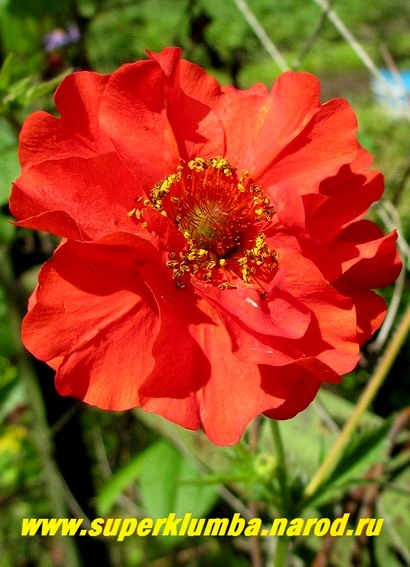 цветы для сада и огорода многолетники осенью фото с названием
