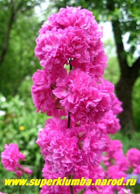 Фото вьющихся цветов и их семена